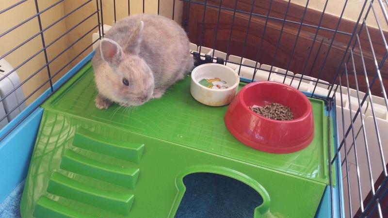Un nouveau la maison lapin nain questions for Avoir un lapin a la maison