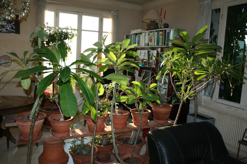 Hivernage des plantes page 10 for Hivernage des plantes