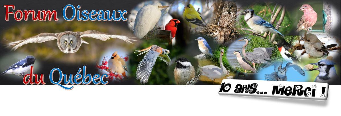 Oiseaux du Qu�bec