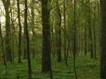 Le Petit Bois