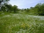 La Prairie Fleuri