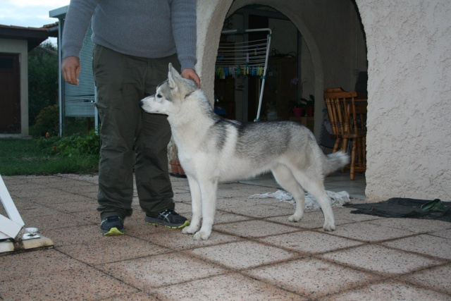 Comportementaliste pour chien en Gironde - Page 2
