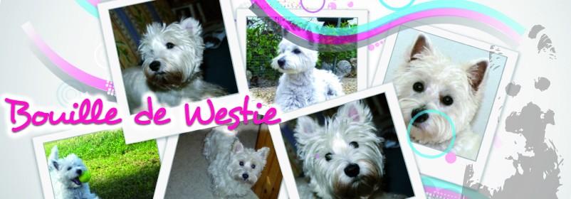 Bouille de Westie
