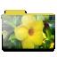 http://i68.servimg.com/u/f68/11/98/67/47/flower10.png