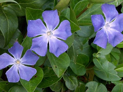 La lettre c printemps broderie main et machine chez - Plante grimpante fleur bleue ...