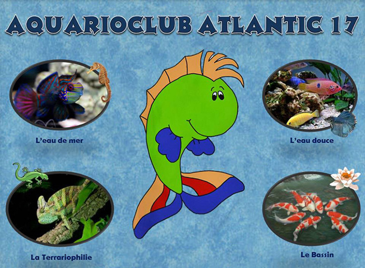 Le Forum de l'Aquarioclub Atlantic 17