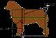 Анатомия аусси