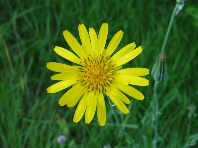 http://i68.servimg.com/u/f68/12/68/59/75/fleur_10.jpg