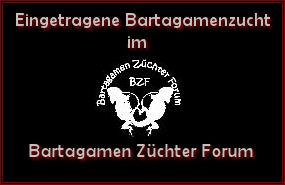 Bartagamen Züchter Forum