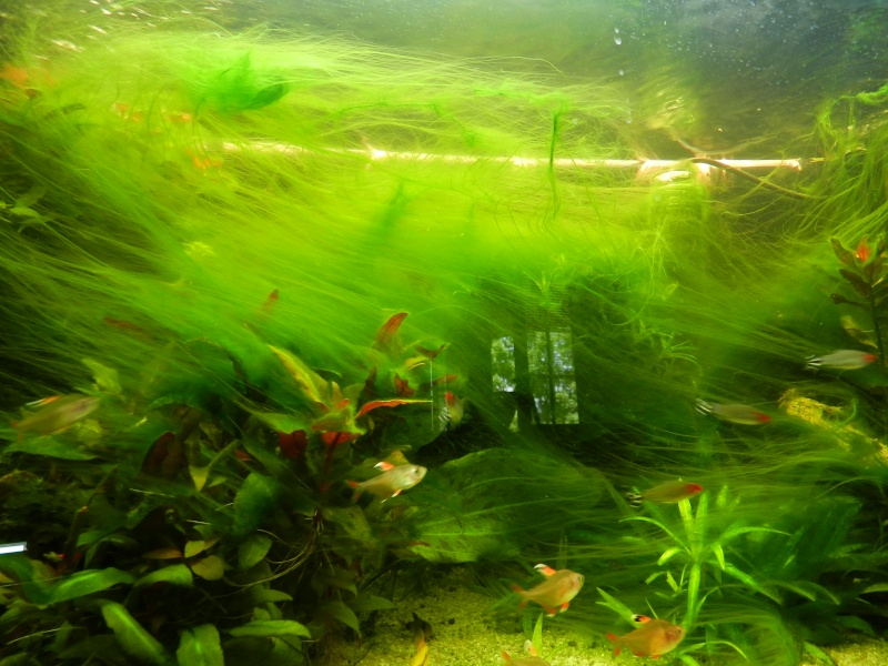 votre avis algues au d 233 marrage