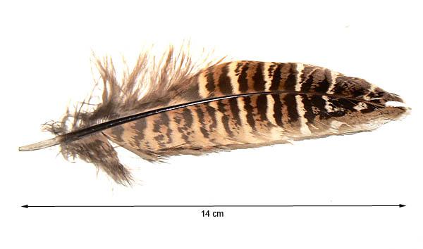 Gothicat world forum consulter le sujet id es de th mes pour les prochains mois - Signification des plumes d oiseaux ...