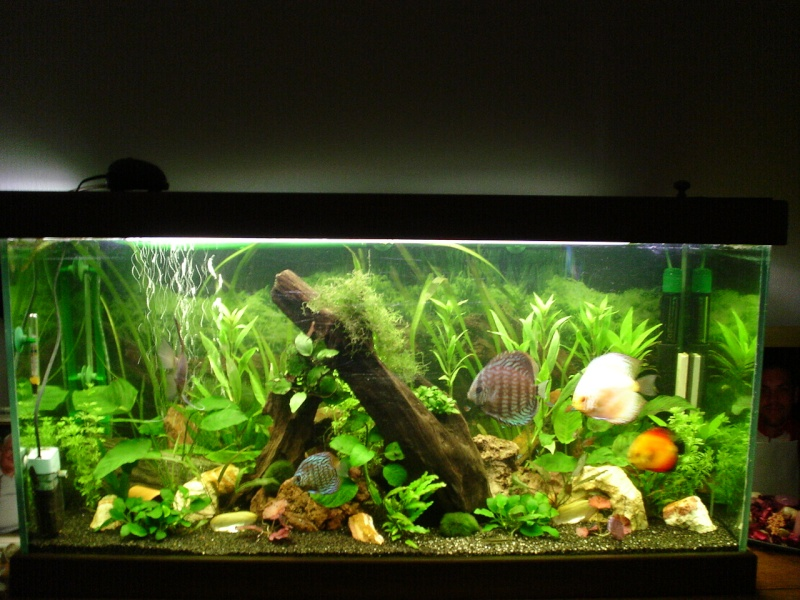 Mon bac amazonien for Aquarium bac