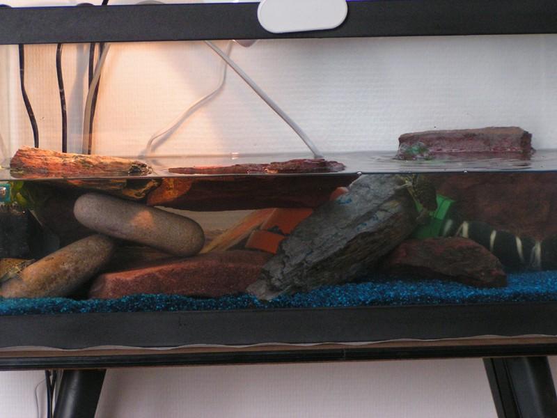 La maintenance des tortues aquatiques for Aquarium tortue aquatique