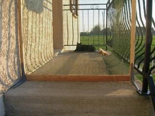 S curiser une fen tre sans balcon - Comment empecher un chat de gratter a la porte ...