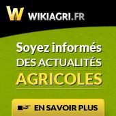 wiki10.jpg