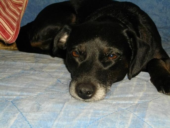 voir des photo de petit chien. Black Bedroom Furniture Sets. Home Design Ideas