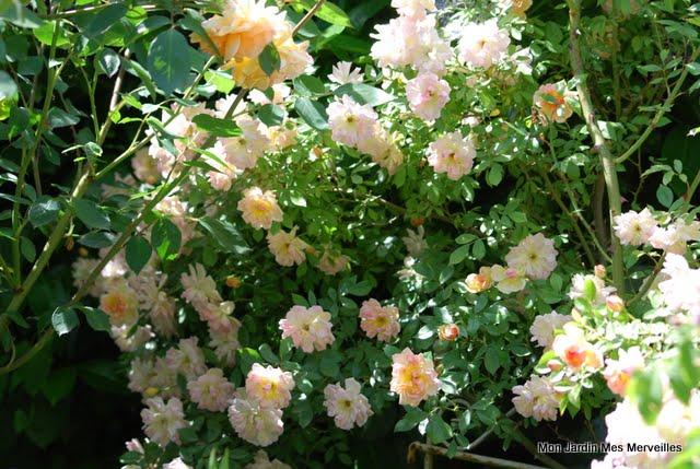 Plantation de fleurs au cimeti re sidi abderrahmane for Plantation de fleurs