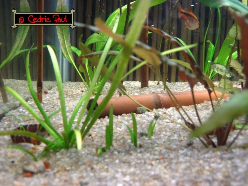 attention le bambou ne tiens pas dans l 39 eau. Black Bedroom Furniture Sets. Home Design Ideas