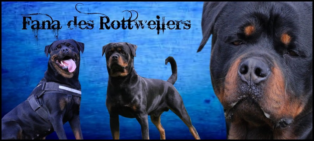 Fana des rottweilers