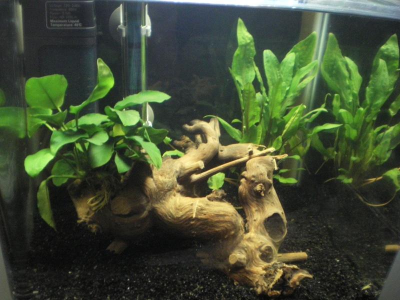 Mon premier aquarium 30 litres for Vendeur aquarium