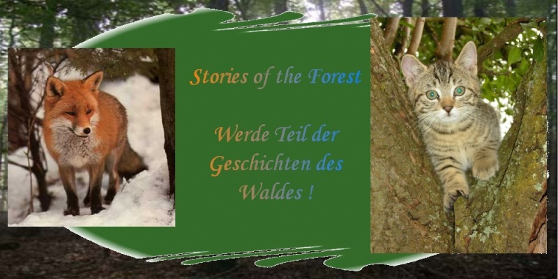 Stories of the Forest