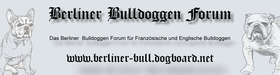 englische bulldoggen in not. Black Bedroom Furniture Sets. Home Design Ideas