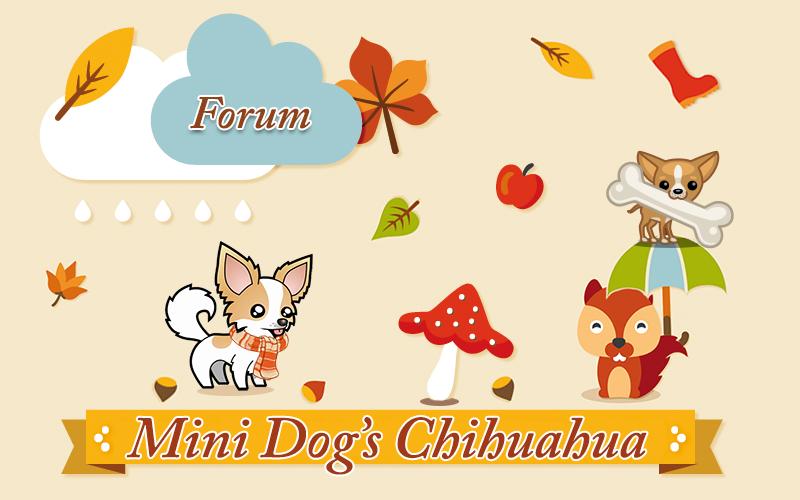 Forum Chihuahua : Mini Dog's Chihuahua