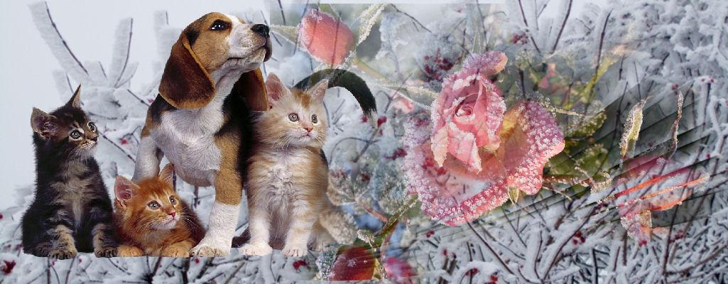 ♥ ♥ ♥ Wir und unsere Tiere..♥ ♥ ♥