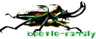 beetle-family