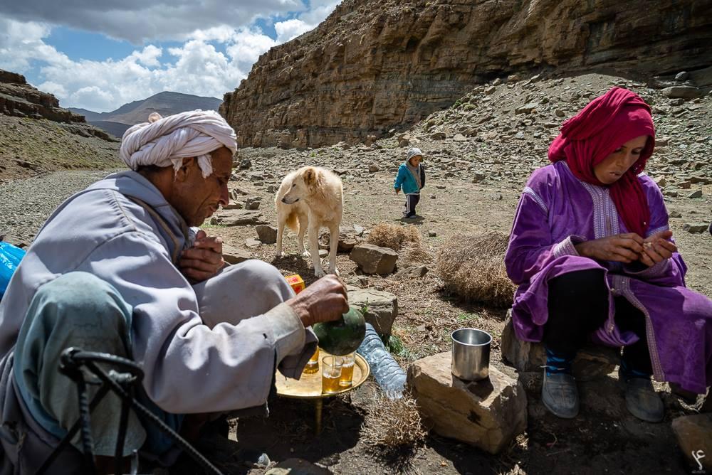 Pastore dell' Asia Centrale & Caucaso