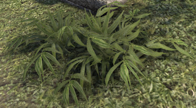 bambou12.jpg