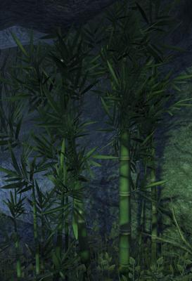 bambou14.jpg