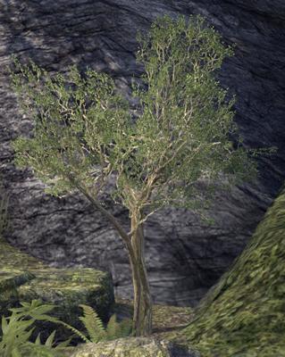 olivie12.jpg
