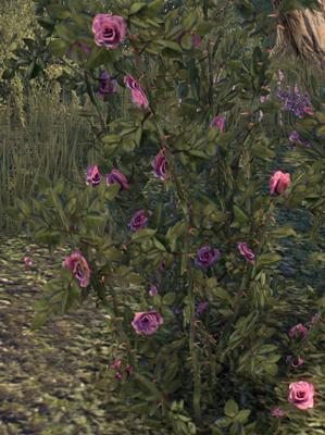 rosier11.jpg