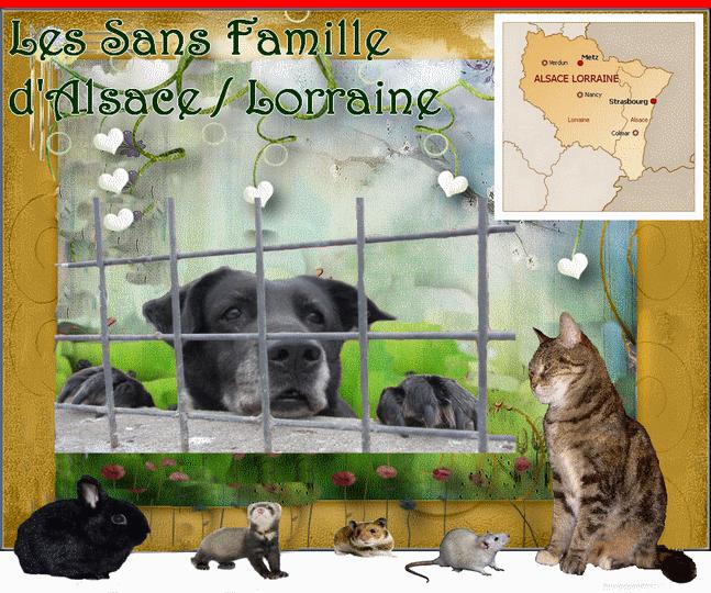 ADOPTION DES SANS FAMILLE D'ALSACE LORRAINE