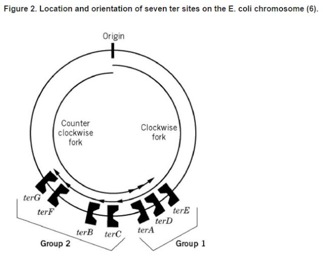 dna replication in prokaryotes and eukaryotes pdf
