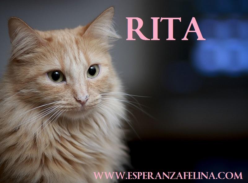 rita210.jpg