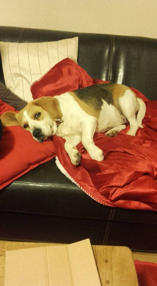 fany beagle ans spa de poitiers 86. Black Bedroom Furniture Sets. Home Design Ideas