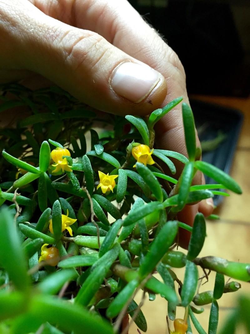 Site en ligne de plantes et accessoires bourbon nature for Plantes en ligne