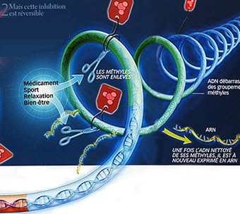 Soin déméthylation telomère adn troubles mentaux