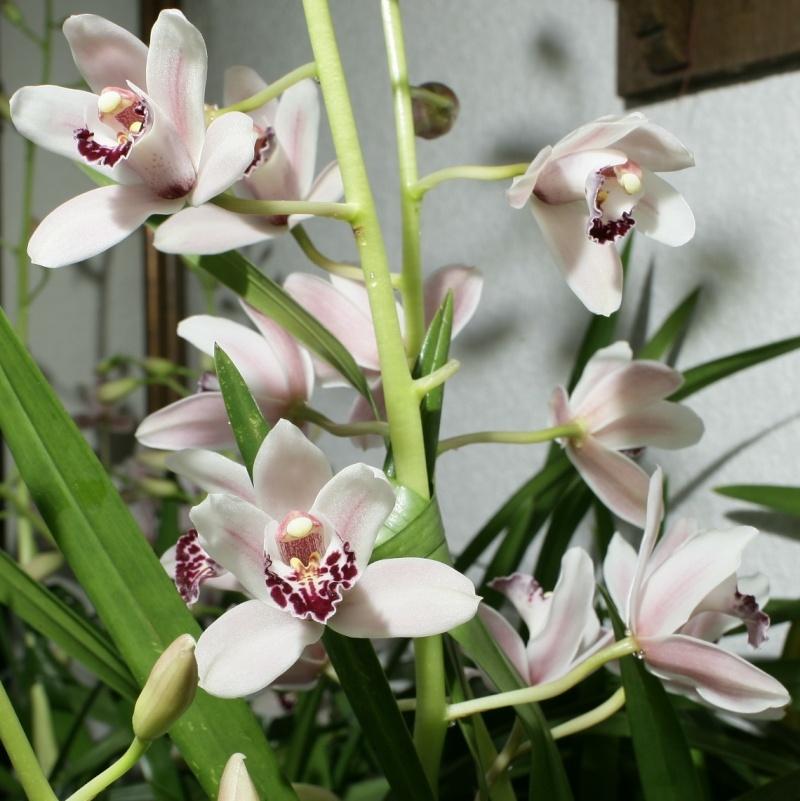 orchideen seite 15. Black Bedroom Furniture Sets. Home Design Ideas
