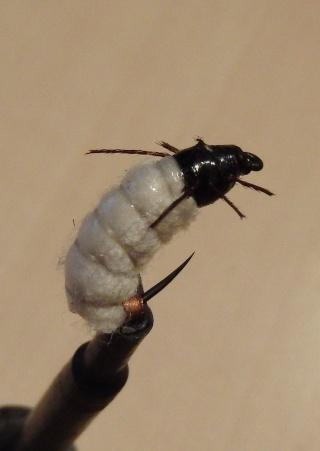 nymphe de larve de trichopt re porte bois rv74. Black Bedroom Furniture Sets. Home Design Ideas