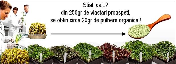 http://i68.servimg.com/u/f68/19/17/38/41/vlasta10.jpg