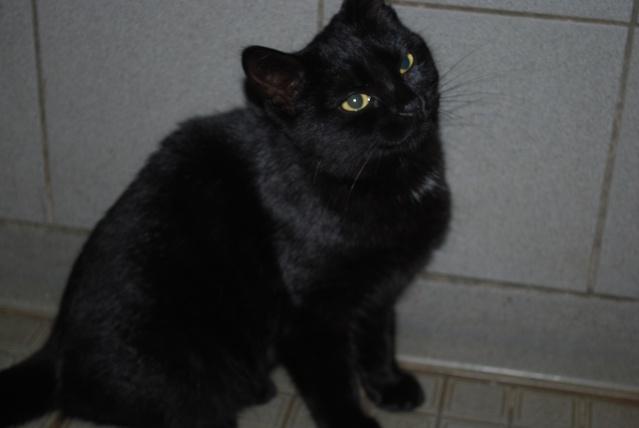 Fille noire jouant avec la chatte