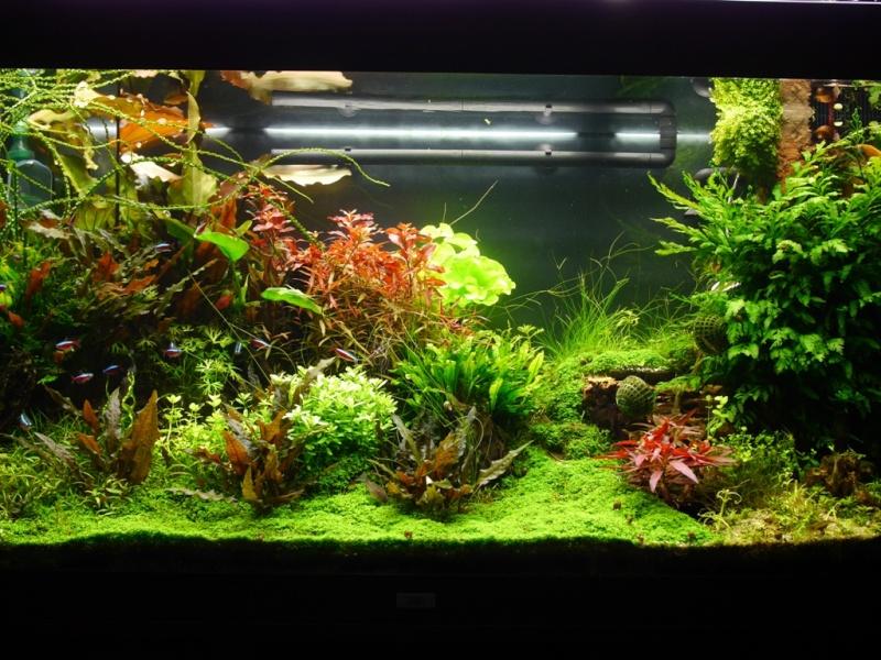 Filtration aquarium angle for Aquarium angle