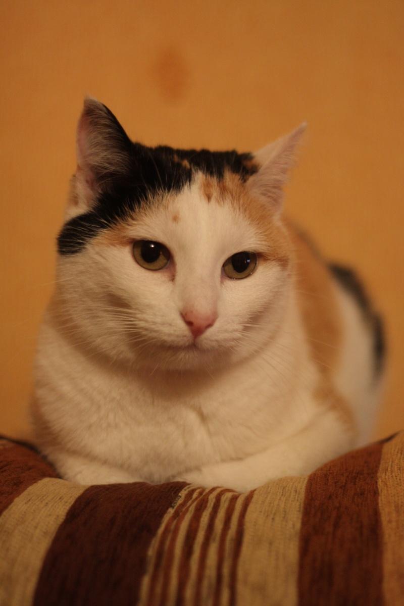 Mon chat fait pipi sur le canape - Mon chat fait pipi dans mon lit ...