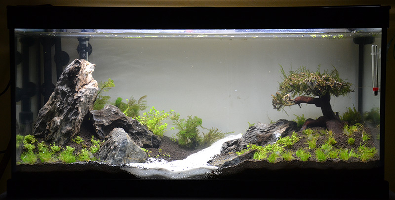Aquascaping 100l