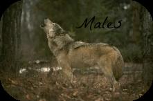 Male Bios