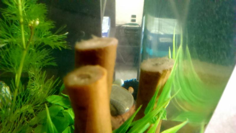 Bambou recouvert par la toile