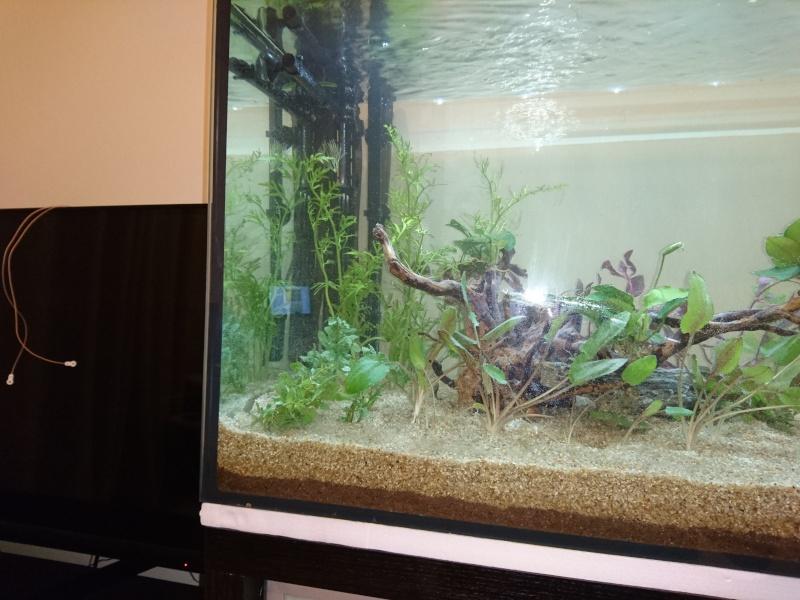 lancement aquarium 240 litres population amazonie. Black Bedroom Furniture Sets. Home Design Ideas